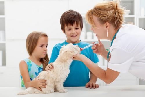 Vaccinations  Ajax, ON LT J